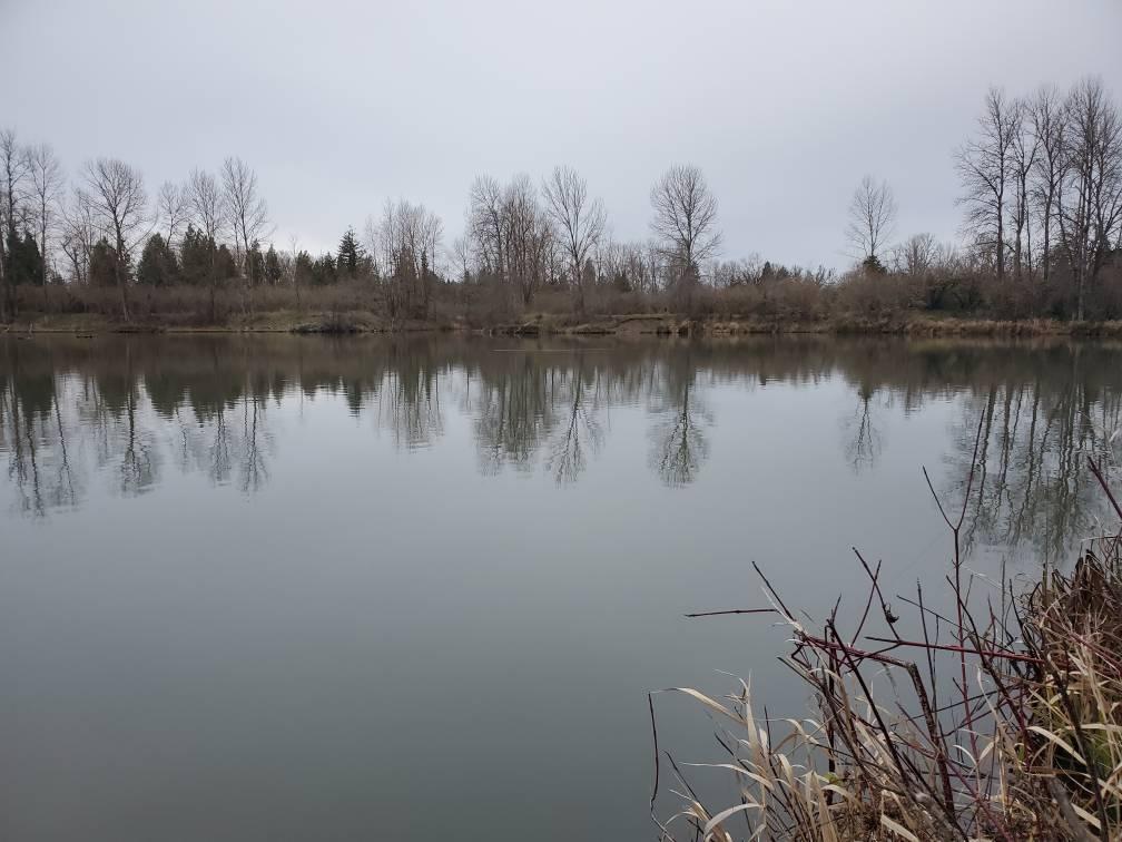 Alton Baker Canal Fishing Reports
