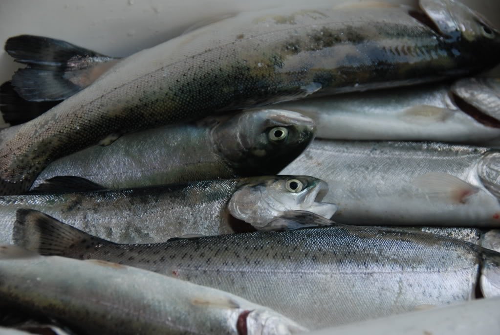 henry-hagg-lake-fishing-reports.jpg