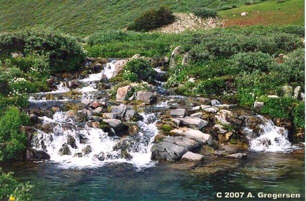 CO_Riparian_alpine_streams.JPG