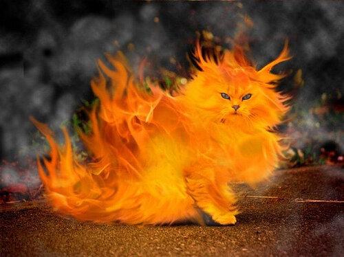 fire-cat2.jpg