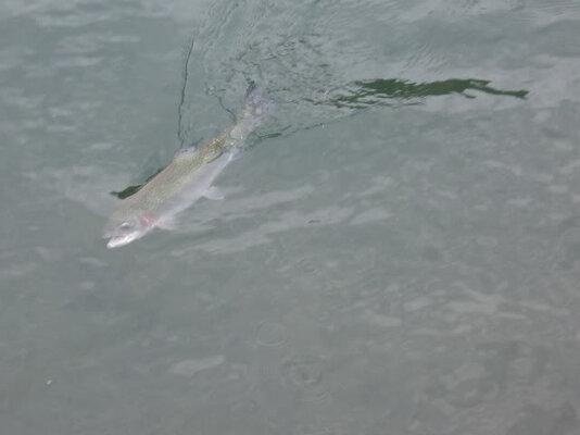 middle-fork-willamette-river2.jpg