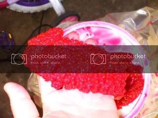 CuredSalmonRoe8-9-200910.jpg