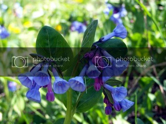 flowers442210.jpg