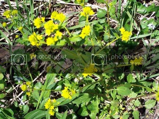 yellowflwrs142210.jpg