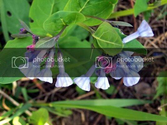flowers342210.jpg