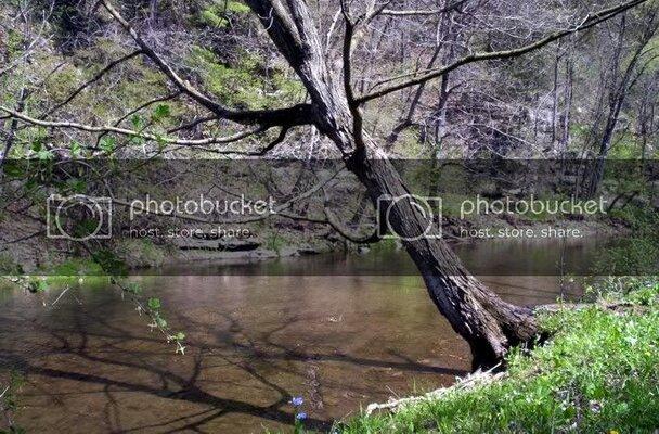 tree142210.jpg
