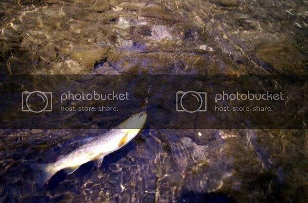 fish242210.jpg