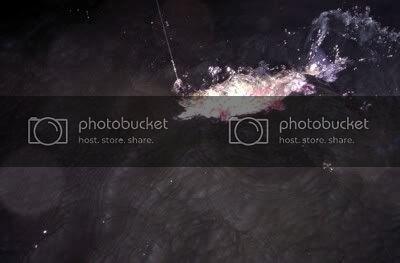 BwFght191410.jpg