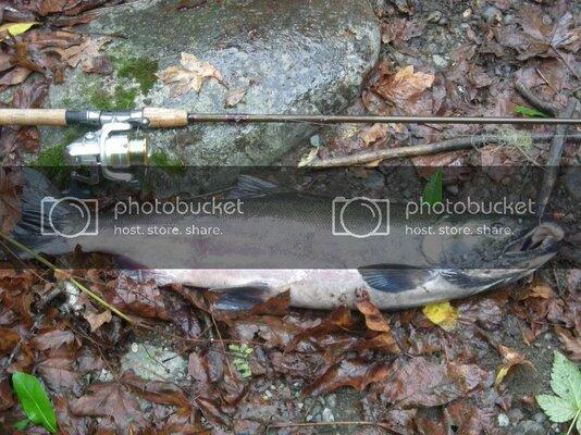 10-18-2010Coho027-1.jpg