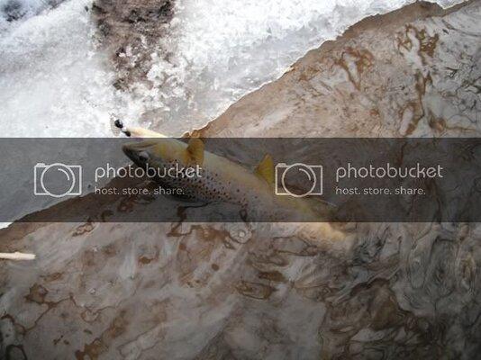 BrnOnIce12132011.jpg