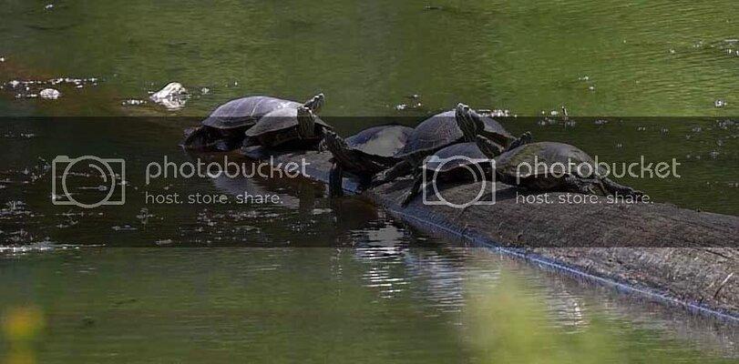 turtles01off.jpg