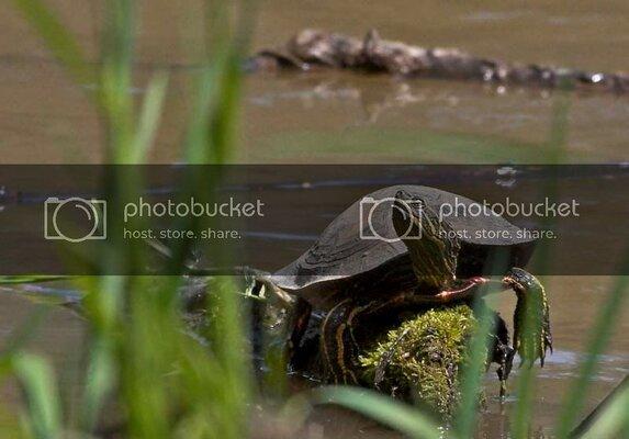 turtle-31off.jpg