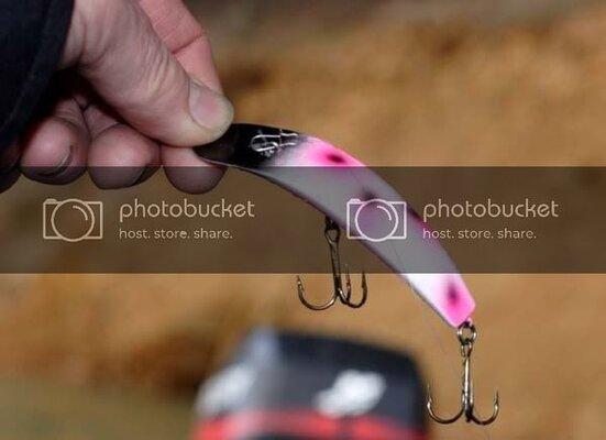 bassflatfish.jpg