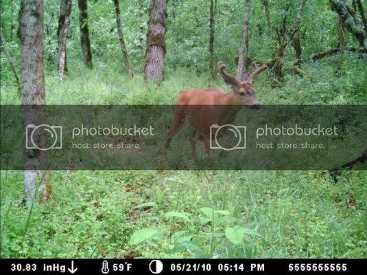 buck2.jpg