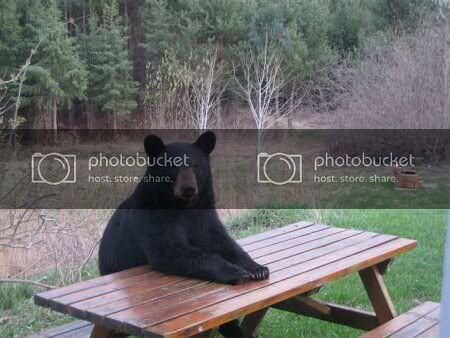 picnic-table-bear.jpg