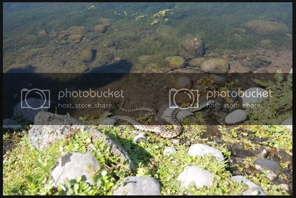 RockyFordSringCreek5181109.jpg