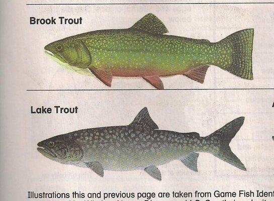 Brook and Lake Trout pic.jpg
